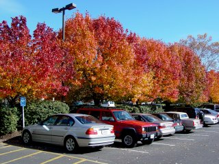 Leaves in fall 2002 on the campus of James Madison University