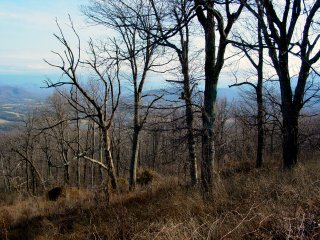 Trees along the Blue Ridge Parkway