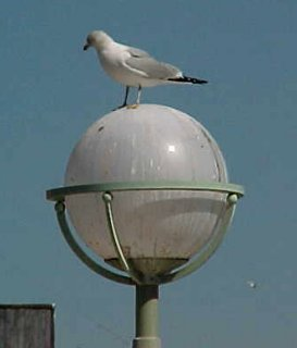 A bird stands on top of a lamppost in Norfolk, Virginia