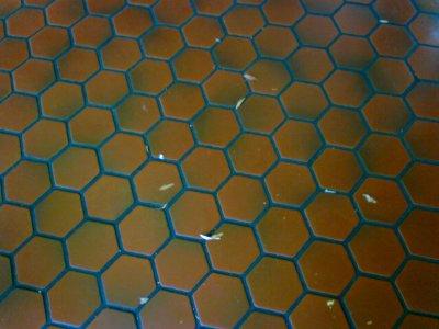 Floor tile at Delaware House