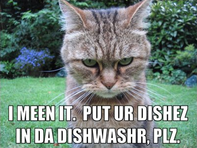 Lolcat dishes