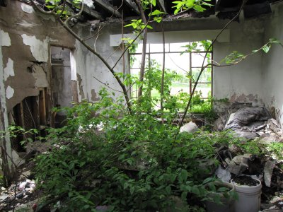 Yes, that's a tree growing inside one of the abandoned Skyline Parkway Motor Court buildings. A tree. I had previously only photographed this particular building from a distance. This is what it looks like inside the room second from far left in the linked photo from 2003.