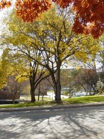 Photo from Autumn Leaves, as originally run