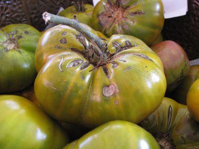 Cherokee Green tomato