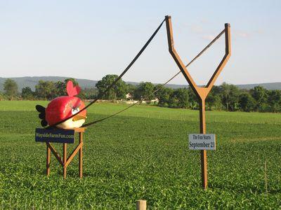 Angry Birds at Wayside Farm