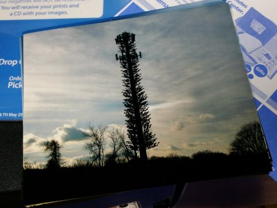 Photo of a disguised cell tower near the Intercounty Connector off of Bonifant Road a few miles from my house.  This was the photo feature for the week of December 22.  The color on this one was right, but the vertical lines were there.