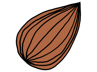 The original almond drawing, colored brown.