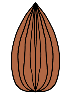 The almond after flipping, colored brown.
