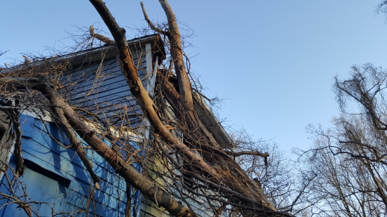 This tree fell on the house some time between 2010 and 2013, using Google Maps imagery and the 2013 video. Clearly, if the house had not already been abandoned by this point, it might have been after this event.