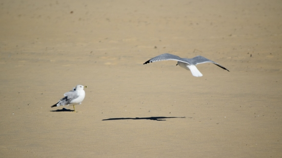 I took a lot of sea gull photos.  I got them moving around on the beach, I got them flying around, you name it.
