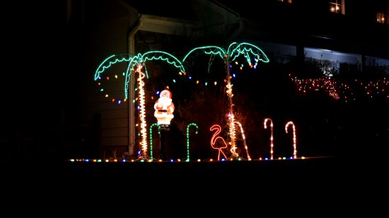 In a neighborhood of single-family houses, this one stuck out due to the more tropical theme.  Palm trees and a flamingo!