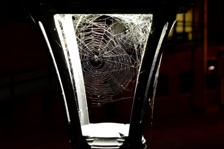 Spider webs in the lamppost