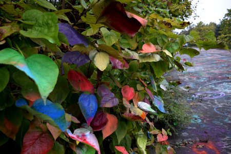 Lots of leaves, colorfully painted.