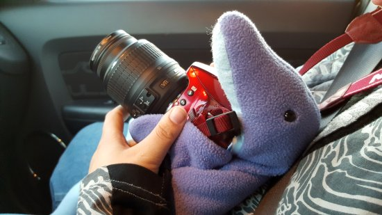 With Elyse's help, Royal Street the dolphin holds Elyse's camera in the passenger seat during our November 2016 planespotting trip.