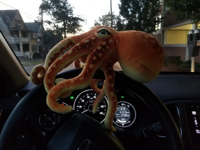 "Woomy hangs onto the steering wheel.  When he saw this photo, he said, ""I don't like that!"""