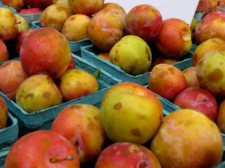 At the Glenwood Sunday Market, I got more fruit photos. I don't know how creative these are, but they're pleasing to look at, and fun to take.
