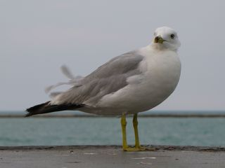 Another thing I saw at Navy Pier was a lot of birds. They were everywhere, doing their thing all around the pier.