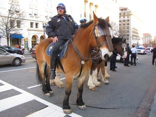 Police officers on horses in the street next to the sidewalk we were demonstrating on.