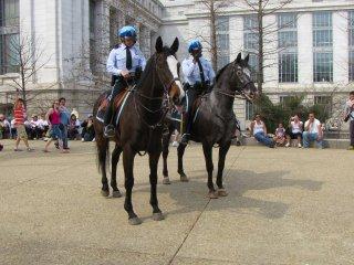 Police horses...
