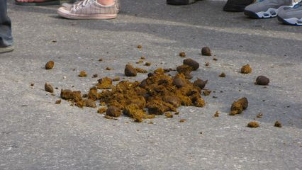 ...and their massive droppings. Yuck.