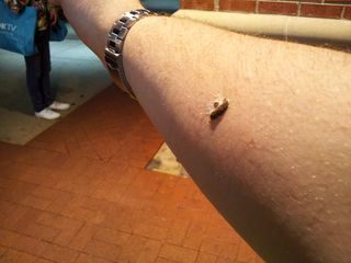 A bird took a dump on my arm from overhead. Note the shape of my arm and how it tapers toward my wrist.