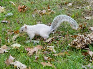 One of the things we found while we were walking around was a white squirrel! That was SO neat to see, and it thankfully stood still long enough for me to photograph it.
