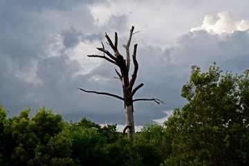I also saw this funky-looking dead tree sticking up above the rest of the scenery.