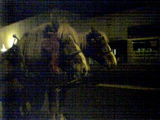On December 10, my friend Katie and I went to downtown Waynesboro at night for a Christmas show.  The turnout was somewhat low, but there were big horses there pulling carriages for people to ride in.