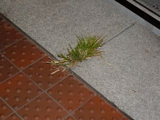 Returning to Vienna, I noticed an oddity: grass growing out of the platform!