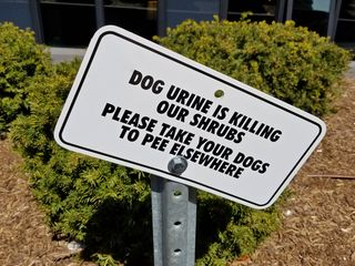 Signs asking that pet owners not allow their dog to urinate on the bushes. I still maintain that these signs are really tacky, just as I said in a 2015 Journal entry, and more obnoxious than the original problem.
