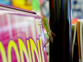 """You never know what you'll find in those Virginia Beach souvenir shops. In this case, a """"big, gross bug"""" sought refuge from the rain on one of the racks at the Holiday Department Store."""