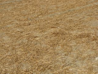 This is what the ground looked like at the demonstration site. No grass - just dirt and straw. Pretty rough terrain. And there was mud, too, as I unfortunately discovered firsthand when I stepped in it.