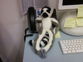 """This stuffed animal belonged to one of our summer interns, who named it """"Kumquat Lemur"""". Interestingly enough, they even created a Facebook account for it! This photo was taken specifically to end up on Facebook, and true to form, I tagged its face in the photo."""