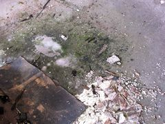 Debris and mold growth on the carpet.