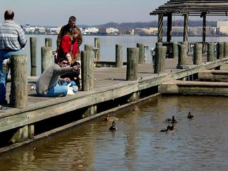 The waterfront at Alexandria is not only a place for boats, but also a place for families, as we watch this family feed the ducks that have gathered.
