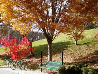 In front of Warren Hall, people lounging on the green swing shown here can enjoy the shade provided by orange leaves, and delight in the red leaves beside them.