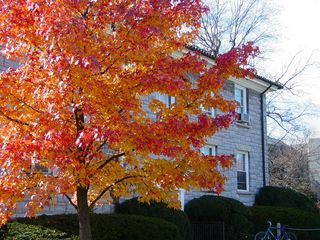 Next to Moody Hall, another gorgeous red-and-orange tree stands.