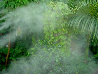 Notice how they maintain the environment - periodically, a mist is sprayed over the area.