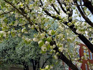 Downtown was quite picturesque, lined by trees, flowers, and other plants.