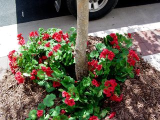 The same concept of adding flowers where there were no flowers extended to the bottom of the trees as well, with fake flowers placed in a pile of mulch.