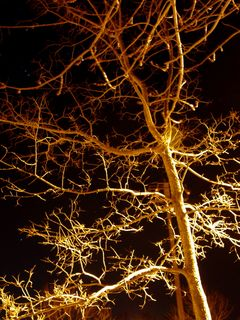 Tree branches also go every which way, giving the appearance of a great network of lines.
