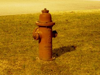 Even the fire hydrant glows in that certain quality of light that brightens the whole park...