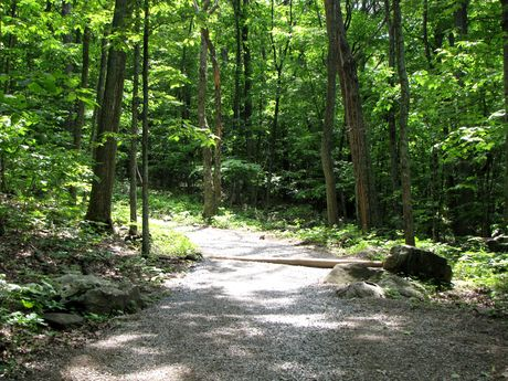 The trail, approximately a quarter mile down the trail