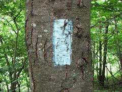 Blue trail blaze mark