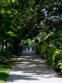 Tall trees provide a tremendous amount of shade, forming a green canopy along the sides of the park.