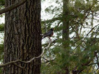A robin! Spring is near!