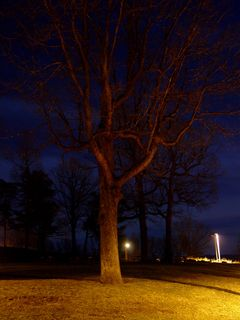 The trees lend almost a ghostly appearance, standing guard around the park.