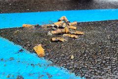 A pile of discarded cigarette butts in a parking lot in Deptford, New Jersey.