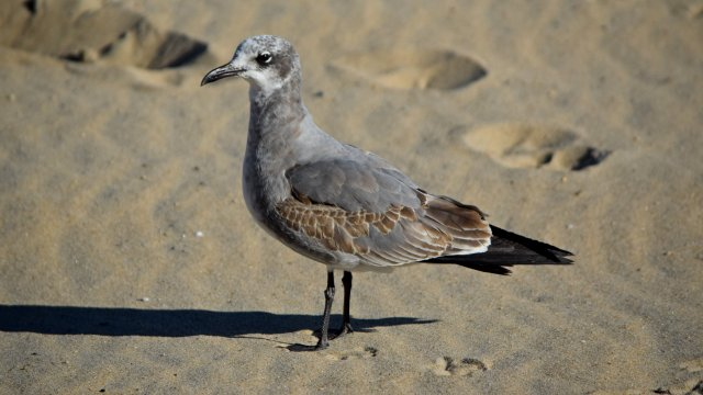 Sea gull standing on the beach.