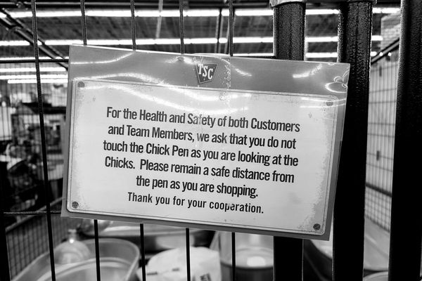 Signage at a Tractor Supply store in Charles Town, West Virginia advising customers not to touch the pen containing baby chickens, ostensibly to limit the transmission of COVID-19.